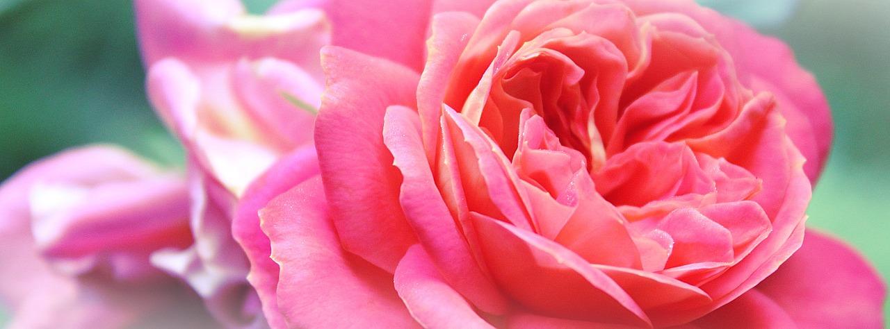 A Fragrance of Christ