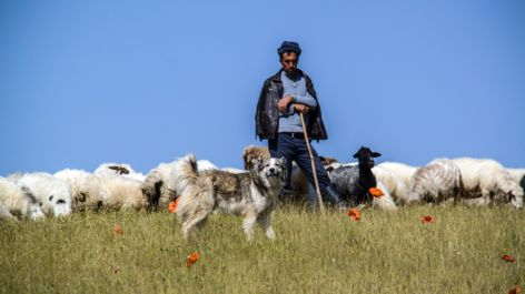 Don't Be a Sheepdog Leader